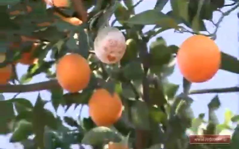 وعدههایی که سر شاخهها یخ زد