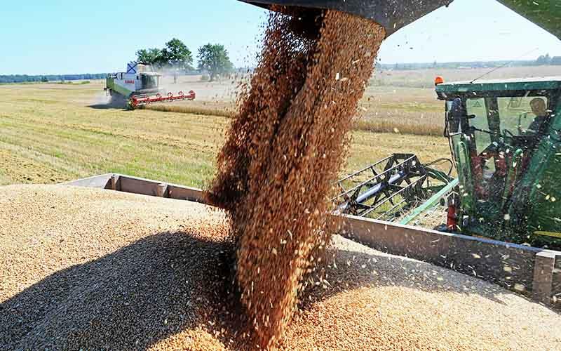 روسیه بزرگترین صادرکننده گندم جهان