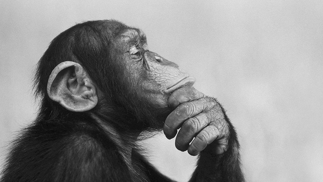 هوش مصنوعی بازار سرمایه میمون شامپانزه ژن مشترک تفکر مغز