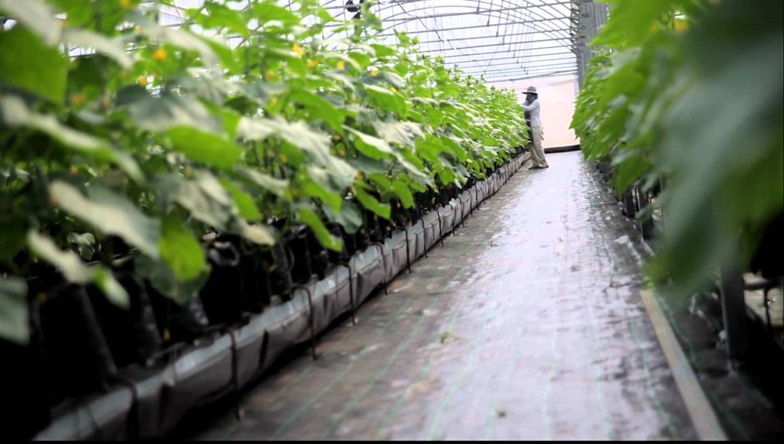 مالتوس کشاورزی مدرن مکتبهای اقتصادی