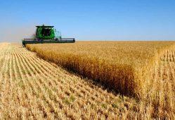 تورم کشاورزی