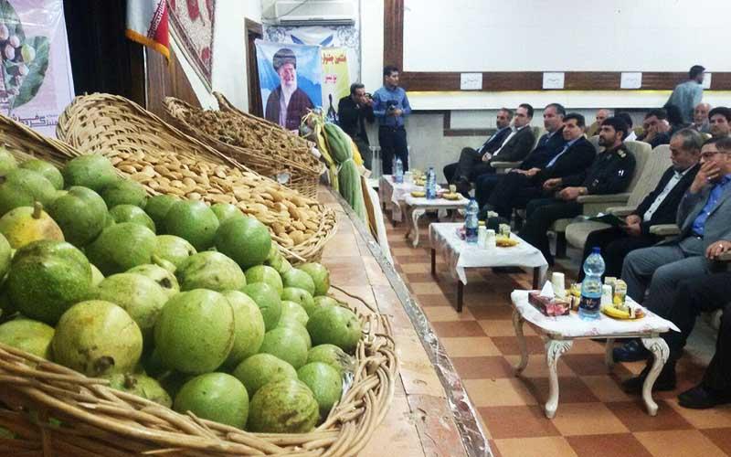 برگزاری جشنواره گردو در ایران سومین تولیدکننده گردو در جهان
