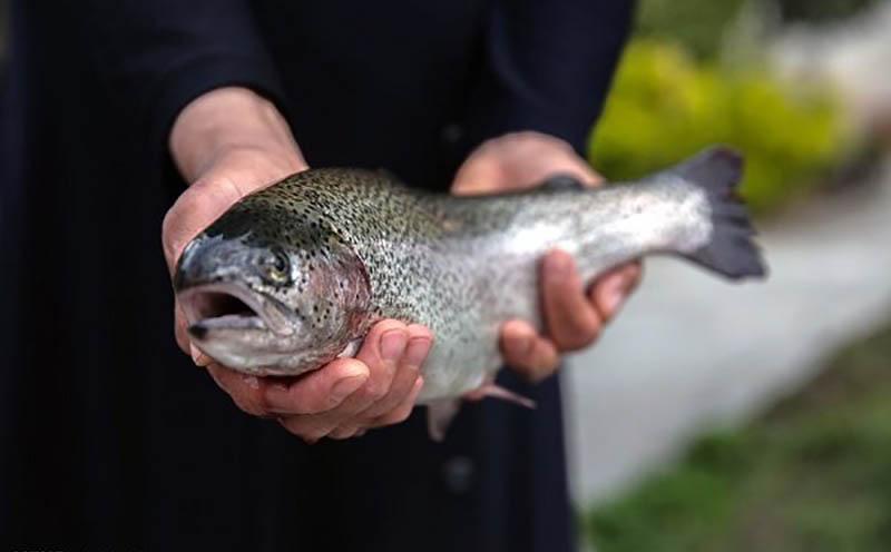 نرخ جدید انواع ماهی