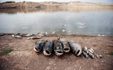 پساب کارخانهها عامل تلفات ماهیان دریای خزر