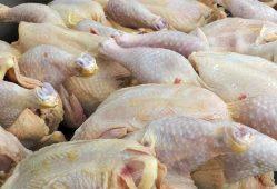 ادامه کاهش قیمت مرغ در بازار به ۷۲۰۰ تومان