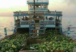 صادرات هندوانه به قیمت هر کیلوگرم ۶۰۰ تومان رکورد شکست