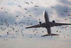 به دنبال تکنولوژی جدید برای برخورد با پرندگان فرودگاه هستیم