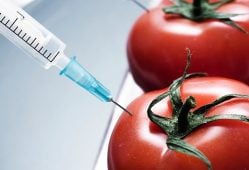 کشاورزی پایدار بهترین گزینه برای تغذیه گرسنگان