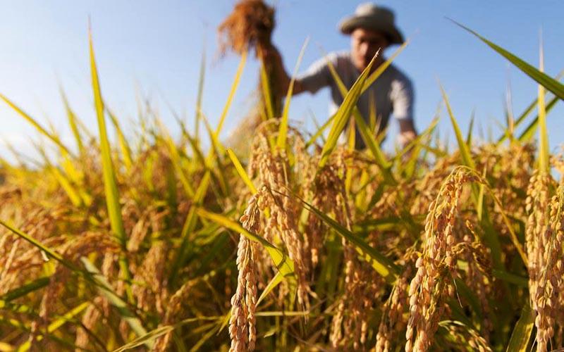 نرخ خرید تضمینی محصولات کشاورزی افزایش نمییابد