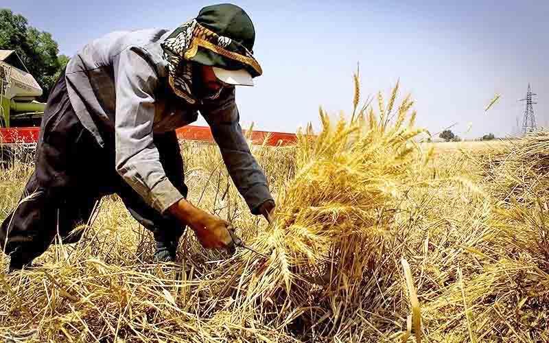 بلاتکلیفی کشاورزان با آغاز کشت پاییزه