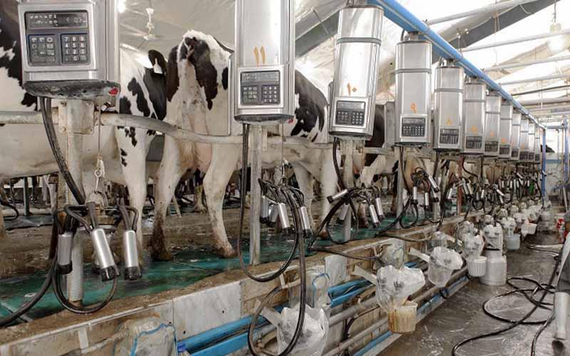 افزایش تولید شیر و گوشت با توسعه نژادهای دامهای کوچک پربازده