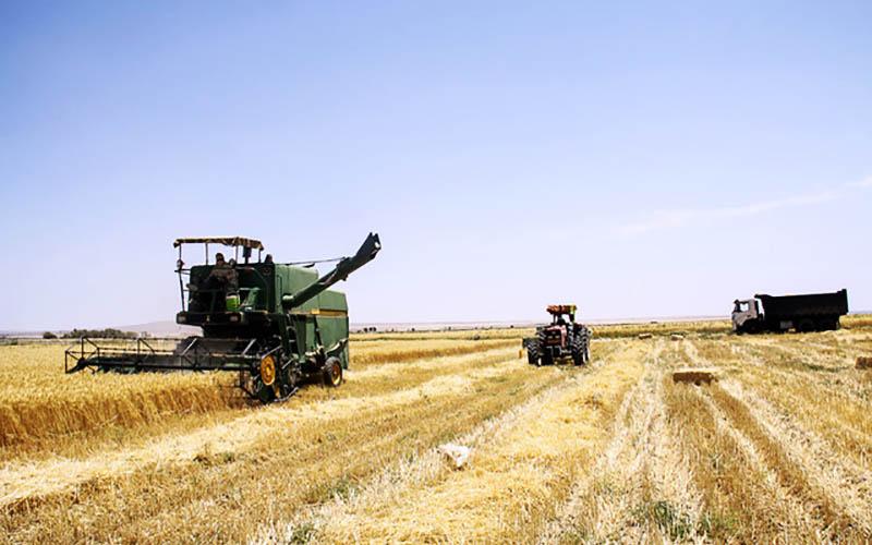 تولید بیش از ۱۳ میلیون تن گندم در برنامه ششم