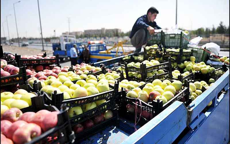 چرا سیب زمینی و گوجه گران شد؟ / صادرات صیفیجات نصف شد