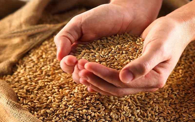 تولید 15 درصد گندم کشور در خوزستان