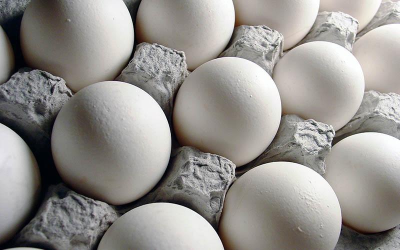 افزایش 20 درصدی تولید تخم مرغ در چهارمحال و بختیاری