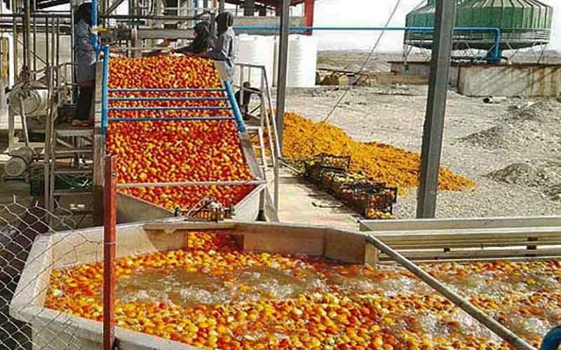 صنایع تبدیلی حلقه مفقوده بخش کشاورزی