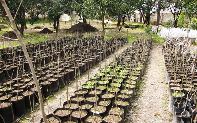تاسیس سه مزرعه جامع تولید نهال