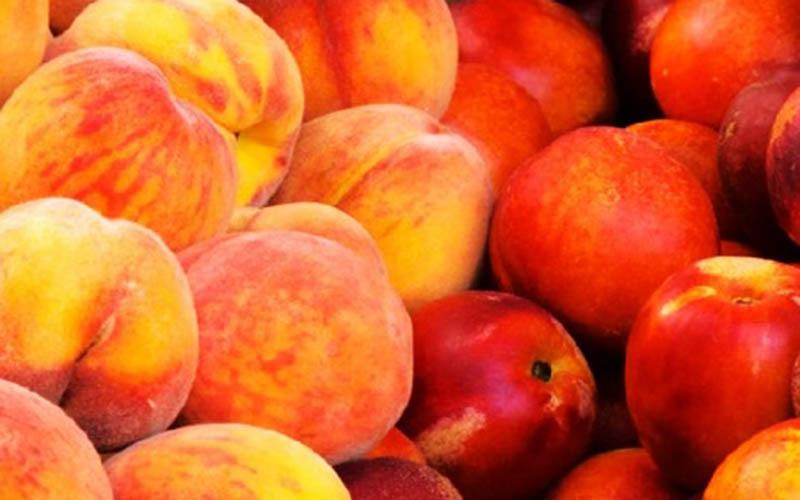 افزایش تولید هلو و شلیل در سال جاری
