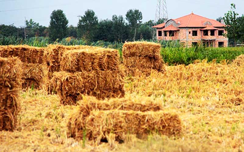 رشد ۱۳ درصدی نرخ خرید تضمینی گندم انگیزشی برای کشاورزان ایجاد نمیکند