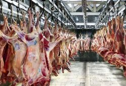 کاهش تقاضا گوشت گوسفندی را ارزان کرد