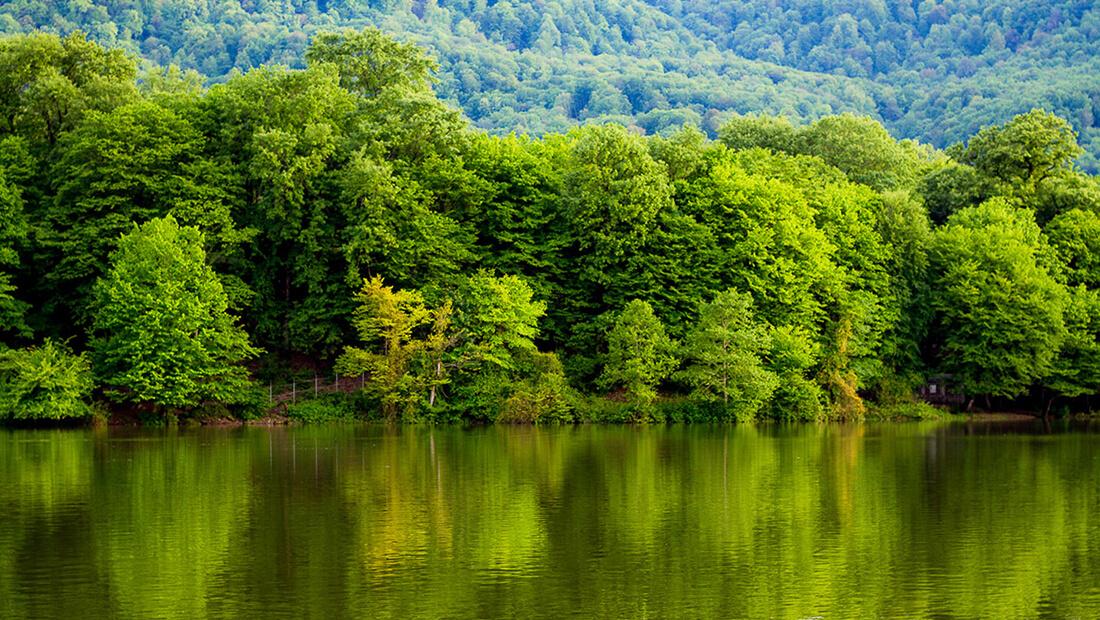 منابع طبیعی تالاب محیطزیست