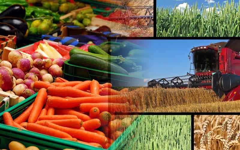 اتلاف ۲۳ میلیون تن محصول کشاورزی در کشور
