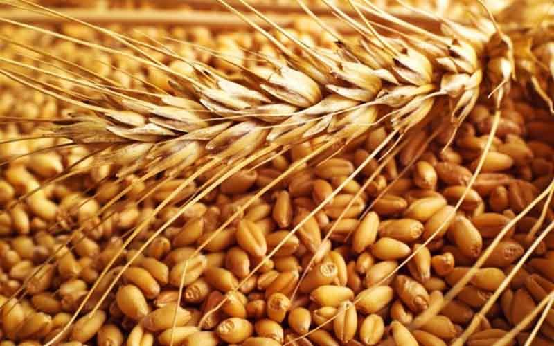 بیش از ۳۴ هزار تن گندم در تالار محصولات کشاورزی عرضه شد