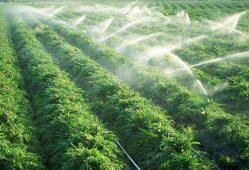 میزان مصرف آب در بخش کشاورزی نهایتا ۷۰ درصد است