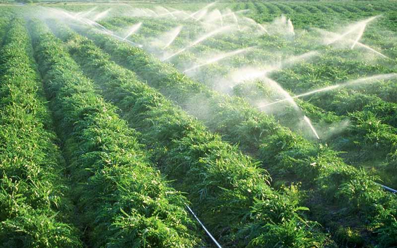طرح آبیاری تحت فشار در 8000 هکتار از زمینهای کشاورزی