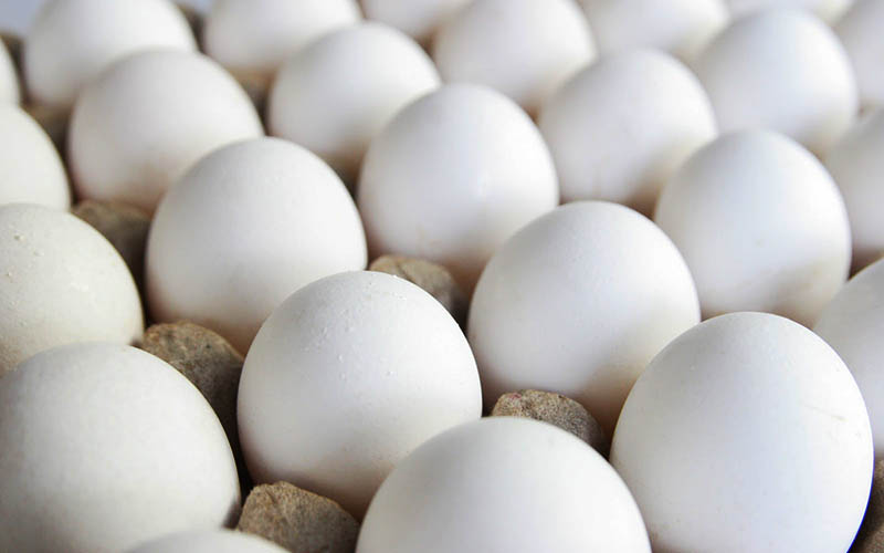 رانتخواران به دنبال واردات تخممرغ