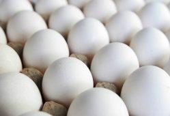 قیمت منطقی تخم مرغ شانهای ۱۲ هزار تومان