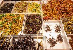 ایران صادرکننده حشرات خوراکی میشود