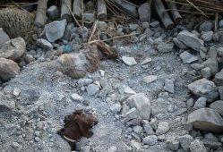 زلزله ۸۰۰ میلیارد تومان به کشاورزی کرمانشاه خسارت زد