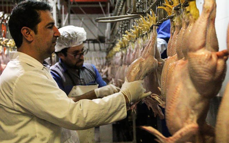 خودکفایی در تولید گوشت سفید در کشور