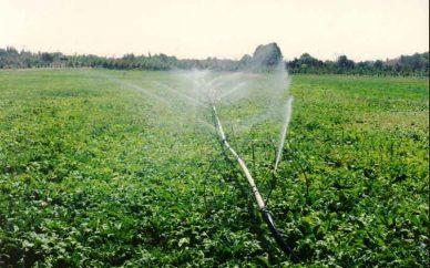 ۲۶۰ هزار هکتار اراضی کشاورزی سنددار میشود