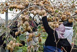 نیازی به واردات میوه نداریم