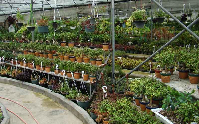 ایجاد ۱۱ هزار شغل توسط تعاونیهای گل و گیاه