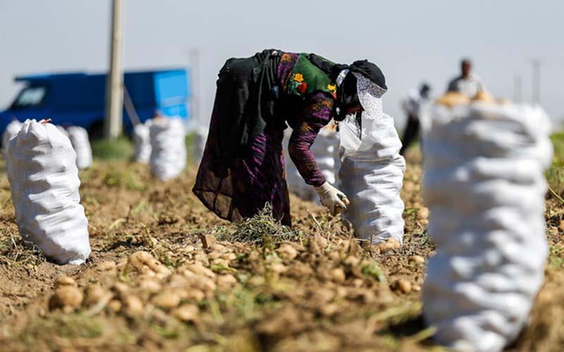 روستائیان ۳ ماهه تا ۳۰۰ میلیون تومان وام میگیرند
