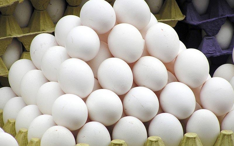 اعلام قیمت واقعی هر شانه تخم مرغ