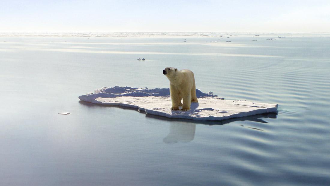 جهانیشدن گرمشدن کره زمین خرس قطبی