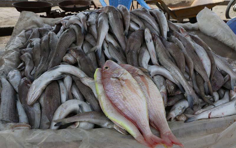 کمبود عجیب ماهی در بازار شهرهای ساحلی!