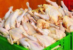 ثبات نسبی قیمت مرغ در بازار با نرخ ۷۶۵۰ تومان