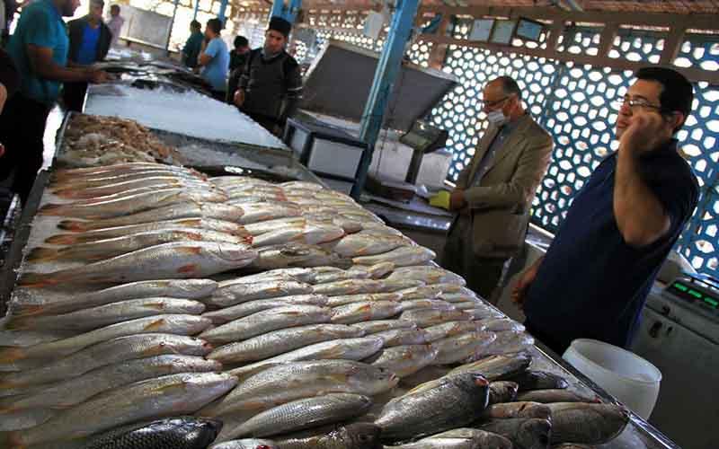 قیمت ماهی در ایام پایانی سال افزایش یافت