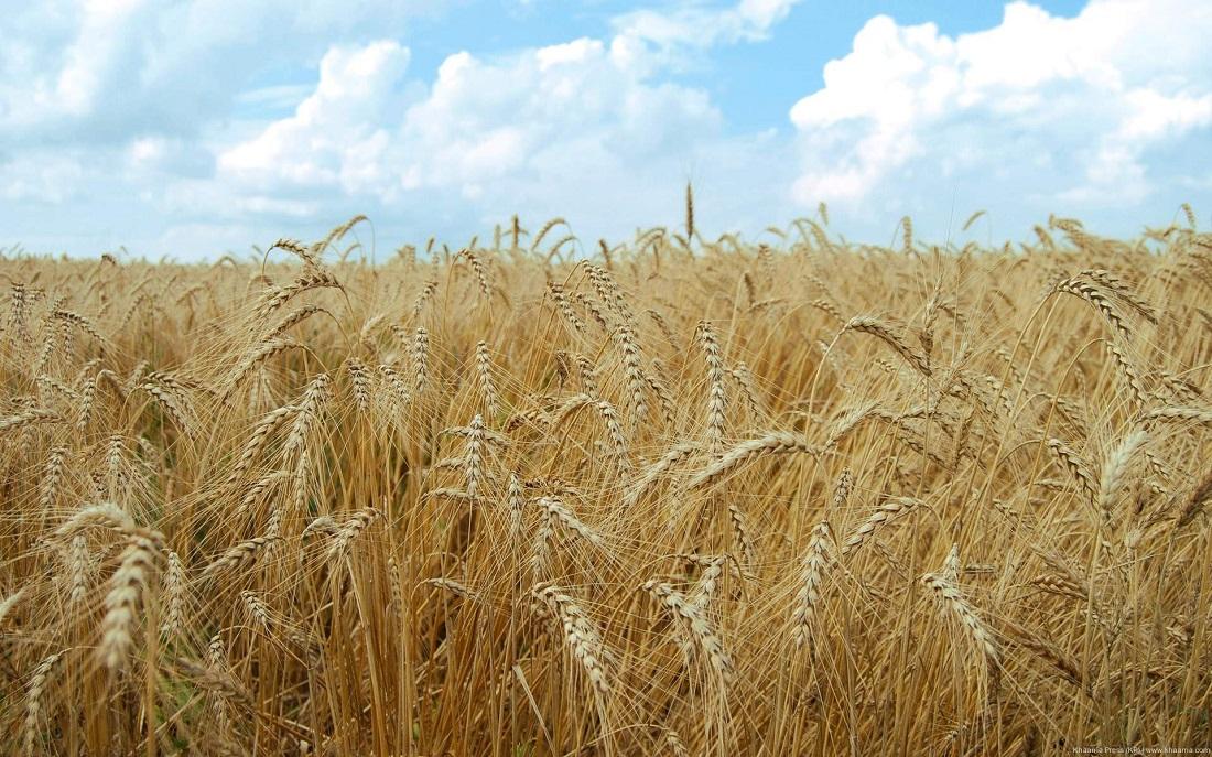 کمبود عناصر مغذی در مزارع آذربایجان غربی