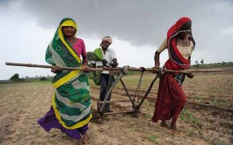 وزیر اقتصاد هند: درآمد کشاورزان را دو برابر میکنیم