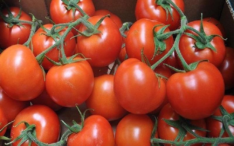 بازار گوجه فرنگی امن میشود
