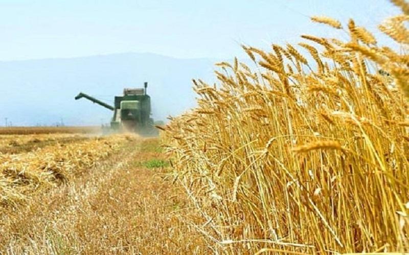 ذخیره ۸ میلیون تنی گندم در کشور