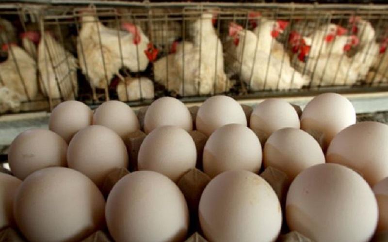 دست مرئی گرانی تخم مرغ در بازار