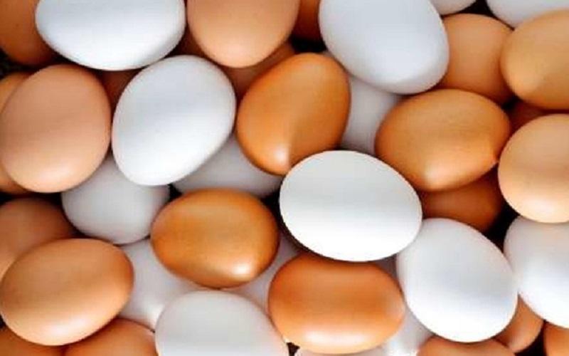 قیمت تخممرغ رو به کاهش است