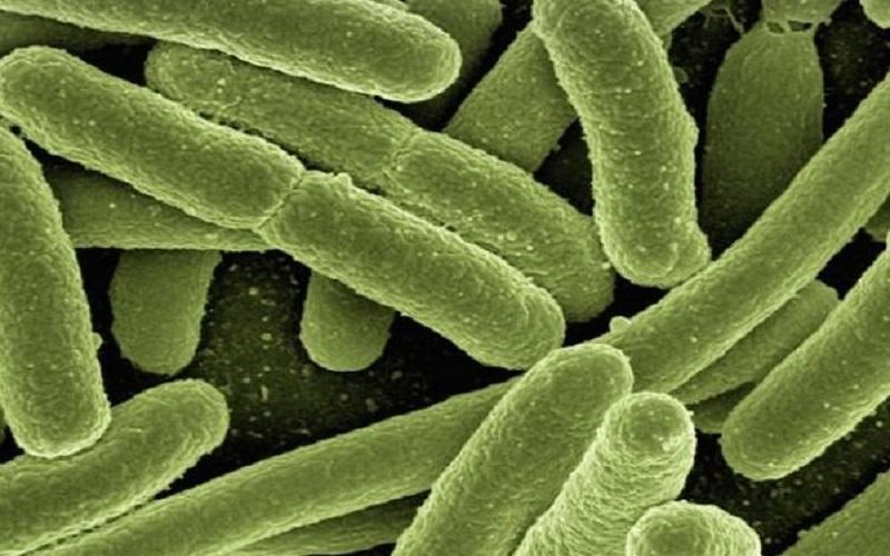 شناسایی سریع باکتری ها با میکروسکوپ هوش مصنوعی